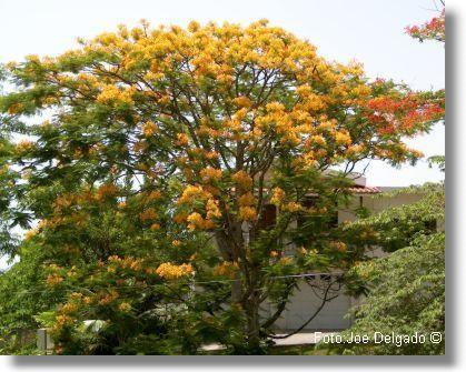 Link To Puerto Ricocom Flora Y Fauna